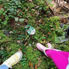 Z roko v roki z gozdom